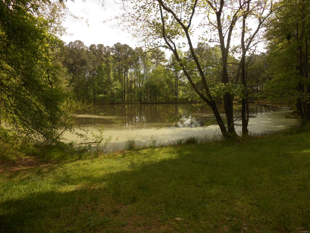 Hunters Woods Recreation Area Pond